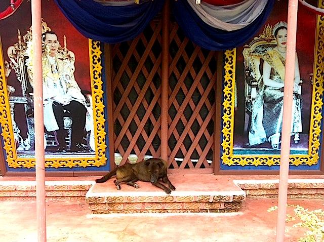 Hund in einem thailändischen Tempeleingang, Kho Chang