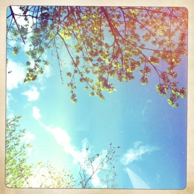 Blick in den Himmel mit Bäumen und Wolken